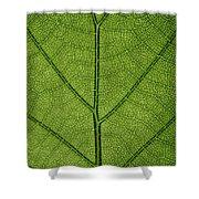 Hydrangea Leaf Shower Curtain