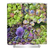 Hydrangea  One Shower Curtain
