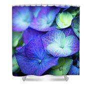 Hydrangea - Purple And Green Shower Curtain