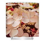 Hydrangeas 7 Shower Curtain