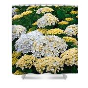 Hydrangeas Blooming Shower Curtain