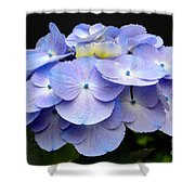 Hydrangeas In Purple Shower Curtain