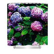 Hydrangeas  Shower Curtain