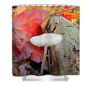 Hygrocybe Borealis Shower Curtain
