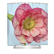 I Am Christmas Rose Shower Curtain