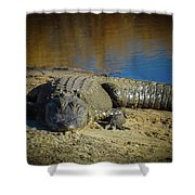 I Am Gator, No. 60 Shower Curtain