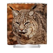 I Am One Good Looking Bobcat Shower Curtain