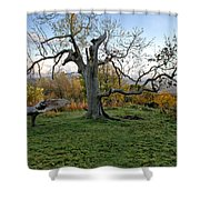 I Am Such A Tree. Shower Curtain