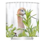 I Am Watching You Shower Curtain