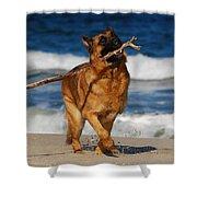 I Got It - German Shepherd Dog Shower Curtain