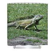 I Iguana Shower Curtain