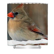 I Just Can't Resist The Beauty Of A Cardinal In The Snow Shower Curtain