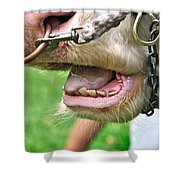 I Need To See My Dentist Shower Curtain by Kaye Menner