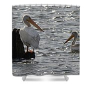 I See You 4921 Shower Curtain