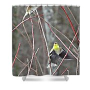 I See You Two Birds In Flight Shower Curtain