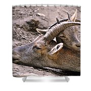 Ibex Mother And Son Shower Curtain