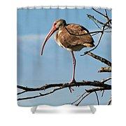 Ibis At  Rest Shower Curtain