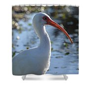 Ibis Blanco Shower Curtain