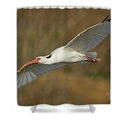 Ibis Glide Shower Curtain