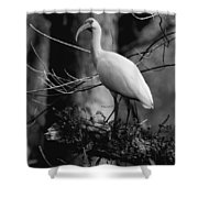 Ibis In Black And White  Shower Curtain