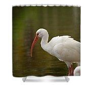 White Ibis Portrait Shower Curtain