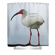 Ibis In The Morning Shower Curtain