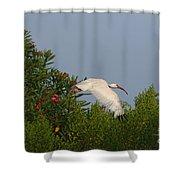 Ibis In The Oleander Shower Curtain