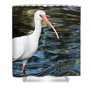 Ibis In The Swamp Shower Curtain