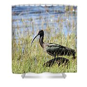 Ibis Looking Around Shower Curtain
