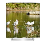 Ibis Pool Party Shower Curtain