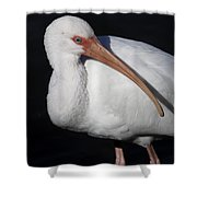 Ibis Pose Shower Curtain