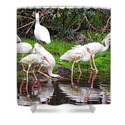 Ibis Reflections Shower Curtain