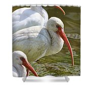 Ibis Three Shower Curtain