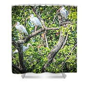 Ibises In A Tree Shower Curtain