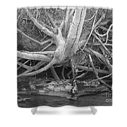 Twisted Roots  Shower Curtain