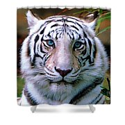 Ice Blue Eyes Of The Tiger Shower Curtain