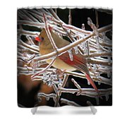 Ice Cage - Female Cardinal Shower Curtain