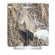 Ice Cold Heron Shower Curtain