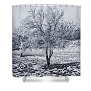 Ice Covered Tree Shower Curtain
