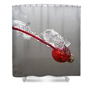 Ice Covered Wild Rose Hip Shower Curtain
