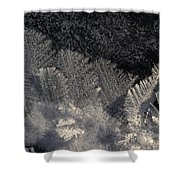 Ice Crystals Form Feather Shapes On Ice Shower Curtain