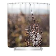 Ice Crystals On Dried Wild Flower Shower Curtain
