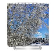 Ice Laden Birches Shower Curtain