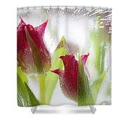 Ice Lantern Shower Curtain