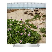Ice Plant Booms On Pebble Beach Shower Curtain