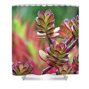 California Red Tip Crassula Ovata Jade Plant Shower Curtain