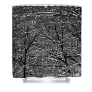 Ice Rain Shower Curtain