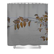 Ice Shell Shower Curtain