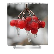 Ice Wrapped Berries Shower Curtain