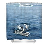 Iceberg And Humpback Shower Curtain